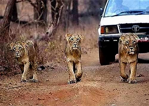 71_Lathi-in-Amreli_Gujarat