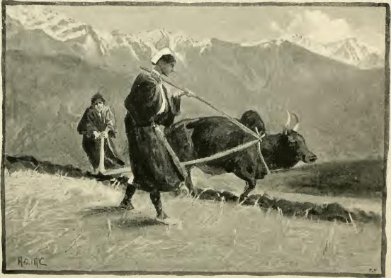 Ar sievietes, arkls viegls, ar dzelzs spici (sanskr. ara - īlens)